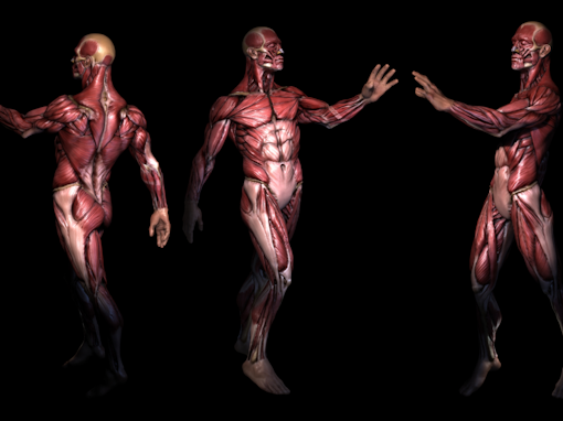 Anatomie Palpatoire