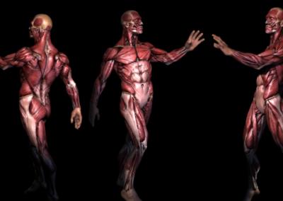 Physiologie et pathologie pour masseurs